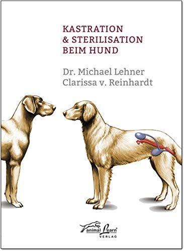 Kastration & Sterilisation beim Hund