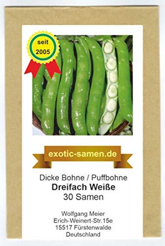 Dicke Bohne - Ackerbohne - Dreifach Weiße - 30 Samen