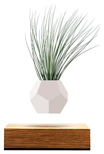 FLYTE Lyfe decoratieve plantenbak van siliconen, eikenhouten basis, zwevend per inductie, geschikt voor luchtplanten