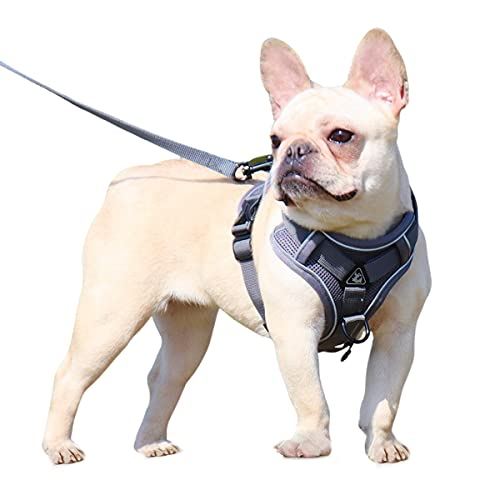 Dog Harness and Leash Set - Mesh Dog Vest Harness Breathable - Reflective Puppy Harness No Pull No Choke for Small Medium Dogs - Cat Harness and Leash Escape Proof for Walking Jogging Hiking
