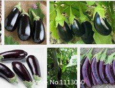Promotion des graines de légumes, 100 PC de graines d'aubergine, noir, pourpre, jaune, vert, graines d'aubergines blanches, mélanger la couleur dans un sac novembre