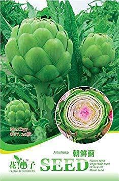 VISTARIC Heiße verkaufen6pcs Flaschenkürbis-Samen, Kürbissamen, Gemüsesamen, Garten Kletterpflanze