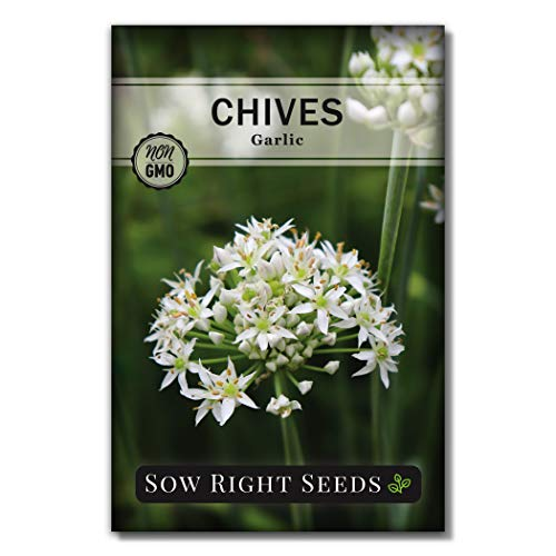 Sow Right Seeds - Garlic Chives Seeds for Planting - Non-GMO Heirloom Seeds; Instructions to Plant and Grow a Kitchen Herb Garden, Indoor or Outdoor; Great Gardening Gift (1)