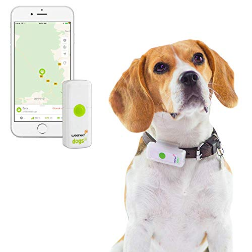 Weenect Dogs 2 - The smallest GPS tracker for dogs in the world