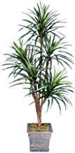 Arcadia Silk Plantation One 6' Yucca Artificial Trees with 5 Heads, with No Pot,