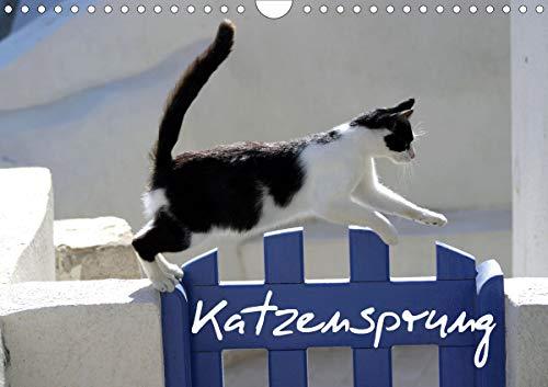 Katzensprung (Wandkalender 2021 DIN A4 quer)