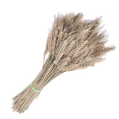 Diamoen 50pcs dell'orecchio secca di Grano Bouquet spiga di Grano Fiore per Decorazione della Festa Nuziale del mestiere di DIY Home Decor - caffè