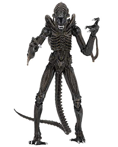NECA Alien Marron Ultimate Warrior 1986 23 cm Scale Action Figure Aliens, Multicolor (NEC0NC51683)