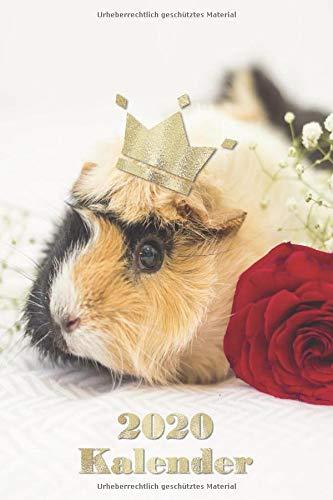 Kalender 2020: Meerschweinchen in rot gold mit Krone - Terminplaner 2020 - Dein Hamster Taschenkalender mit Wochenplaner und Monatskalender 1 Woche 2 ... Zubehör Geschenk (Schreibwaren, Band 3)