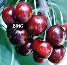 Best black tartarian dwarf cherry trees sweet Reviews