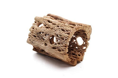 3, 6, 9, 12 Inch All Natural Teddy Bear Cholla Wood Extra Hollow Untreated Organic Aquarium Driftwood Decoration Chew Toy Shrimp Crab Pleco Cichlid Nano Tank Birds 1 or 5 Pieces (1 Piece, 3 inch)