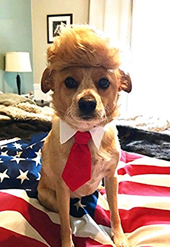 FMJI Trump Style Pet Costume Dog Wig, Donald Dog Clothes with Collar & Tie Head Wear Apparel Toy for Halloween, Christmas, Parties, Festivals