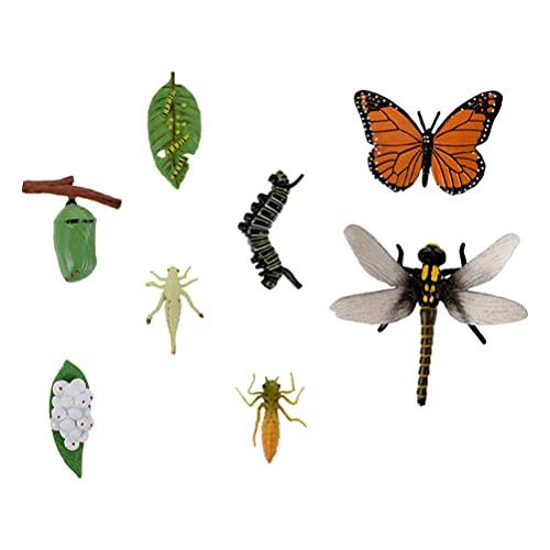 STOBOK 2 Sets Insekt Tillväxt Cykel Modell Insekt Livscykel Kids Leksaker Simulering Insekt Tillväxt Cykel Modell Tidig Utbildning Insekt Undervisning Hjälp Liv Kognition Modeldekoration