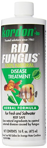 Kordon #39856 Rid Fungus- Disease Treatment for Aquarium, 16-Ounce, Black