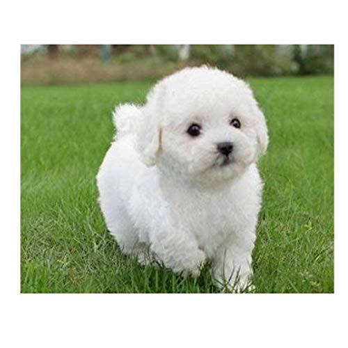 Maaun Realistic Teddy Dog Lucky, Teddy Plüschpuppe, Cute Pudel Plüschpuppe Welpe Suffed Doll für Halloween, Weihnachten und Geburtstagsgeschenke (Weiß)