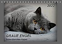 GRAUE ENGEL Britischkurzhaar-Katzen (Tischkalender 2022 DIN A5 quer): Traumhafte Portraetfotos von Britischkurzhaar-Katzen (Monatskalender, 14 Seiten )