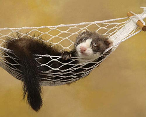 """ZKAIAR Paint by Numbers DIY Acrylic Painting Kit for Kids & Adults 16"""" X 20""""Ferret Hammock Sleeping Small Animal Rest Pattern with 3 Brushes & Bright Colors"""