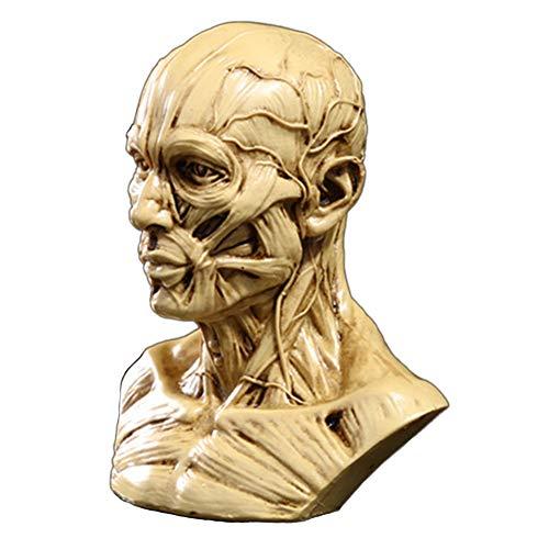 Zumllex - Cabezal de cráneo de anatomía portátil de 4 pulgadas con hueso muscular, estudio de dibujo para artistas médicos (desnudo)
