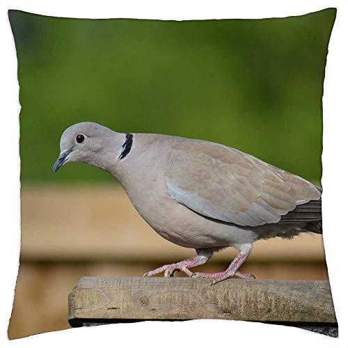 LESGAULEST Throw Pillow Cover (18x18 inch) - Ring-Neck Dove Streptopelia Capicola Cape Dove Bird