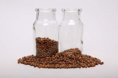 Bio-Saatgut Nicht nur Pflanzen: Ololiuqui Samen; Rivea; Samt (12 100 Samen g) FäHRE