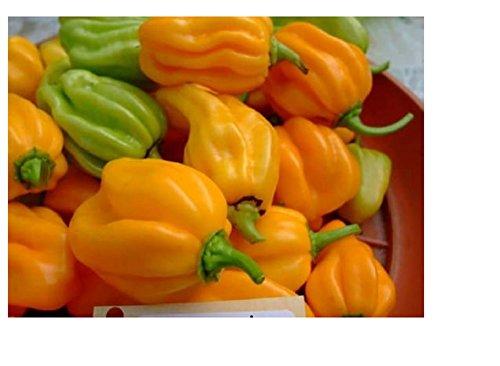 lot de 50 graines de piment coloris mix jardin potager potage cuisine sauce plante aromatique
