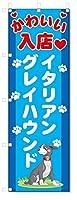 のぼり旗 イタリアングレイハウンド (W600×H1800)DOG、犬、ペットショップ