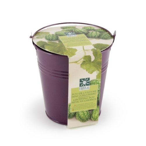 Radis et Capucine Mini concombres Bio avec Pot en Zinc Violet