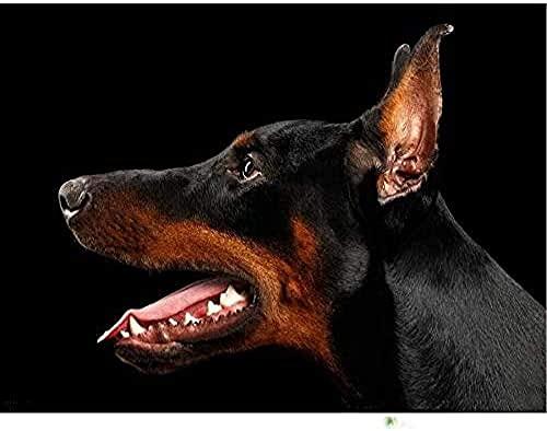 MSDEWLH Diy 5D Pintura De Diamante Kit,Perlas De Animales De Perro Doberman Bordado De Juegos Dedecoración Hogareña 30X40Cm(12X16 Pulgada)