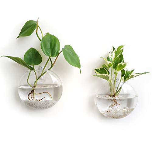 Mkono Mkono Wall Hanging Glass Terrariums Planter Oblate Flower Vase for Hydroponic Gardens