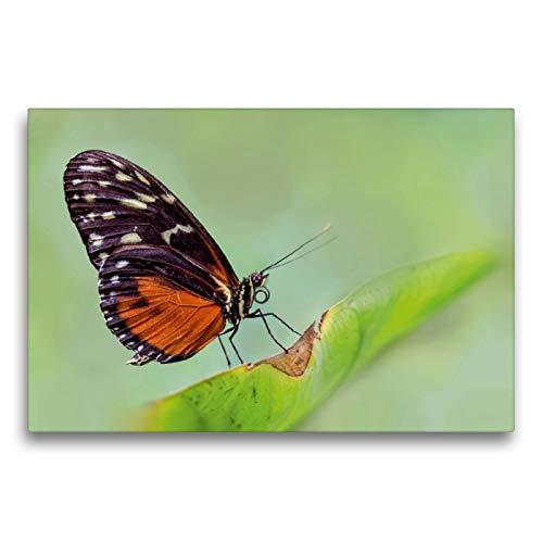 CALVENDO Premium Textil-Leinwand 75 cm x 50 cm quer, Schmetterling - Getigerter Passionsfalter (Heliconius ismenius) | Wandbild, Bild auf Keilrahmen. und zarte Geschöpfe Tiere Tiere
