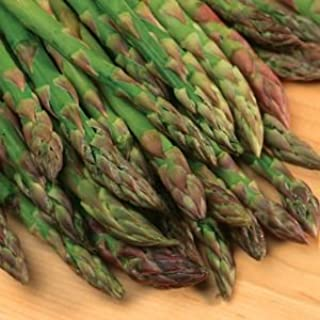Jersey Giant Asparagus Plants Crowns Roots Bare Root 100 Ea