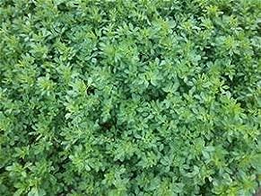 Alfalfa Seed 1lb Bag (COATED)