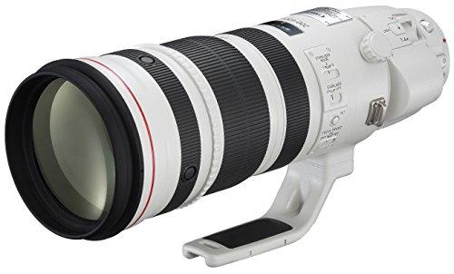 Canon 200-400 mm/F 4,0 EF L is USM Extender 1,4X Objektiv (Canon EF/EF-S-Anschluss,True)