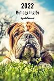 2022 Bulldog Inglés Agenda Semanal: 143 Páginas   Tamaño A5   14 Meses   1 Semana en 2 Páginas   Planificador   Agenda Semana Vista   Canófilo   Perro   En Español