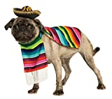 dog costume, Mexican style poncho and sombrero hat