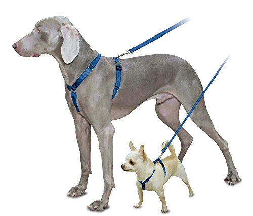 PetSafe Sure-Fit Harness, Adjustable Dog Harness from the Makers of the Easy Walk Harness, ROYAL BLUE, MEDIUM