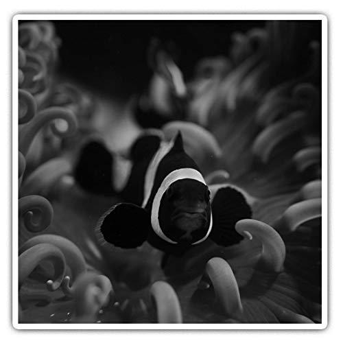 Impresionantes pegatinas cuadradas (juego de 2) 10 cm BW – Onyx Clownfish Tropical Reef Divertidas calcomanías para portátiles, tabletas, equipaje, reserva de chatarras, frigoríficos, regalo fresco #39332