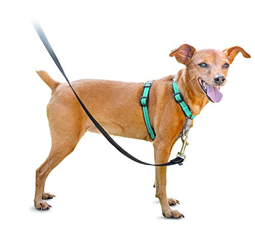 PetSafe 3in1 Harness, from The Makers of The Easy Walk Harness, Fully Adjustable No-Pull Dog Harness,Teal,Extra Small