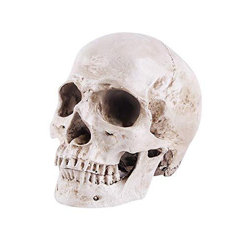 Aolvo menschliches Totenkopf-Modell, 1:1 Lebensgröße, Anatomiemodell, klassisch abnehmbarer, anatomischer Shanto, hochpräzises Lehrwerkzeug, Halloween-Dekoration