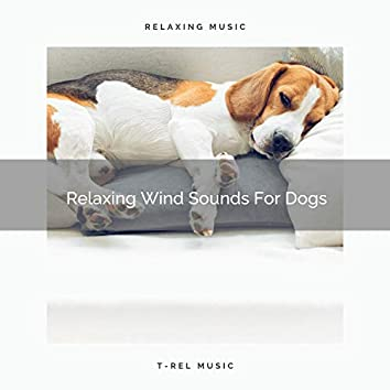 Relaxing Wind Sounds For Dogs