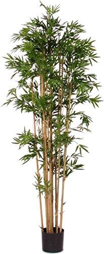 NewGreen Bamboo Bambu Japanese - Albero Artificiale con Tronchi Veri da Arredo Interno - Alto 175 cm