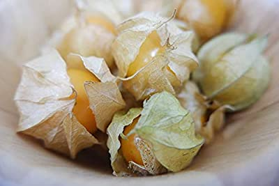 Pinky's Seed Company - 50+ Cape Gooseberry Seeds (Physalis peruviana) - 'Ambrosia'