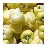 David's Garden Seeds Pepper Bell White SL1517 (White) 50 Non-GMO, Heirloom Seeds...