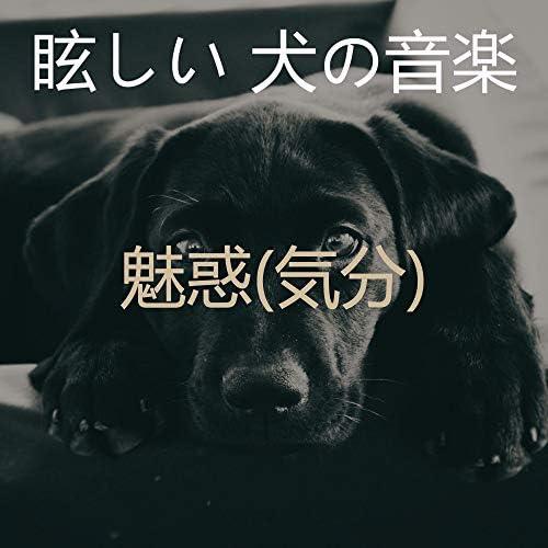 眩しい 犬の音楽