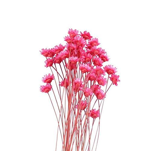 XUENING JWGD 50Pcs Schöne brasilianische Kleine Stern-Blumen-Ornamente Getrocknete Blumen Blumenstrauß Anordnung Blumen Hauptdekor (Farbe : Rot, Größe : 41x6.5cm)