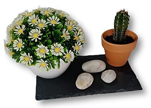 Centro de Mesa Decorativo Planta Cactus Natural Flores Artificiales Bandeja de Pizarra Negra y Piedras Decorativas