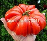 bloom green co. saldi! 50 pz gigante big tomato bonsai, extra large extra buone pomodoro saporito alimenti biologici bonsai frutta verdura facile grow bonsai: 5