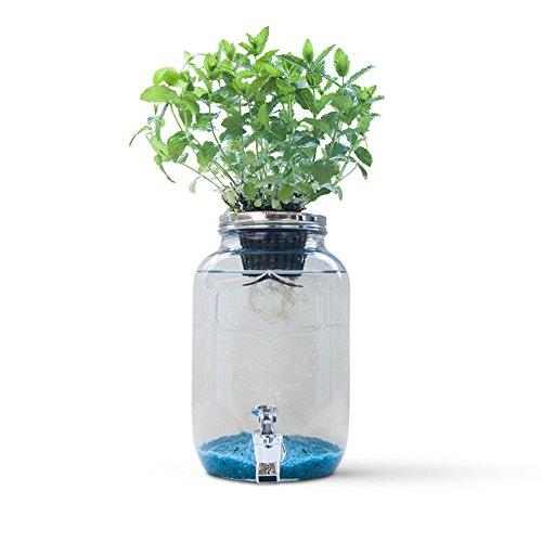 Resetea Blue Jar Sistema de hidroponía Creativa, 4 litros