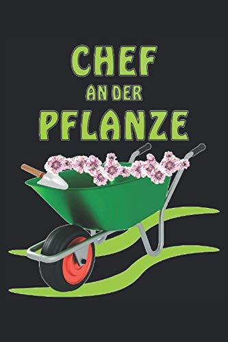 CHEF AN DER PFLANZE: Liniertes...