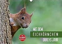 Mit dem Eichhoernchen durchs Jahr (Wandkalender 2022 DIN A3 quer): Eichhoernchen, ueber das ganze Jahr beobachtet und fotografiert (Geburtstagskalender, 14 Seiten )